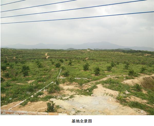 江门鹤山柚子水肥一体化项目
