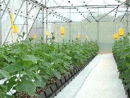 无土栽培温室