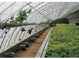 高效节能日光温室和双连栋日光温室
