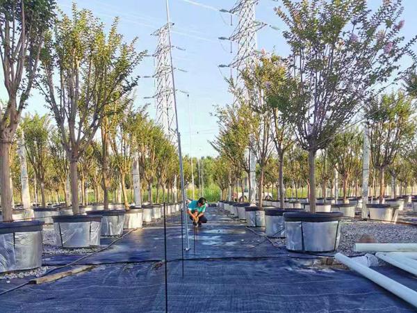 工程案例丨南沙苗圃基地