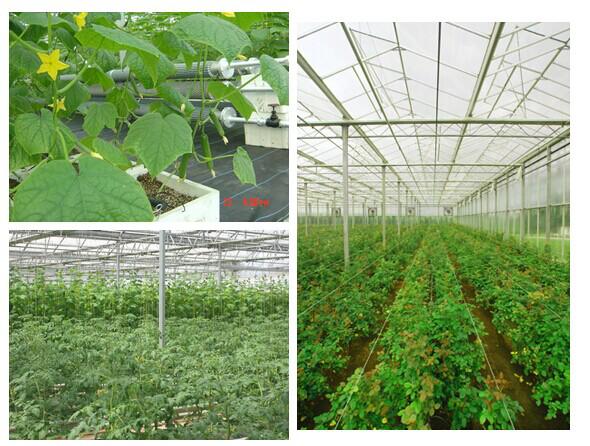 生产温室.png